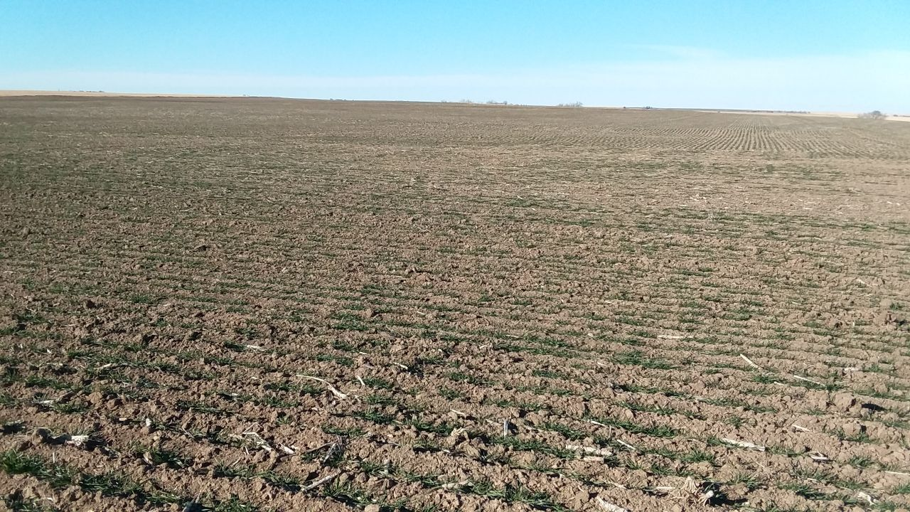 Item 2 in 480 Acres More or Less Ness County, Kansas gallery