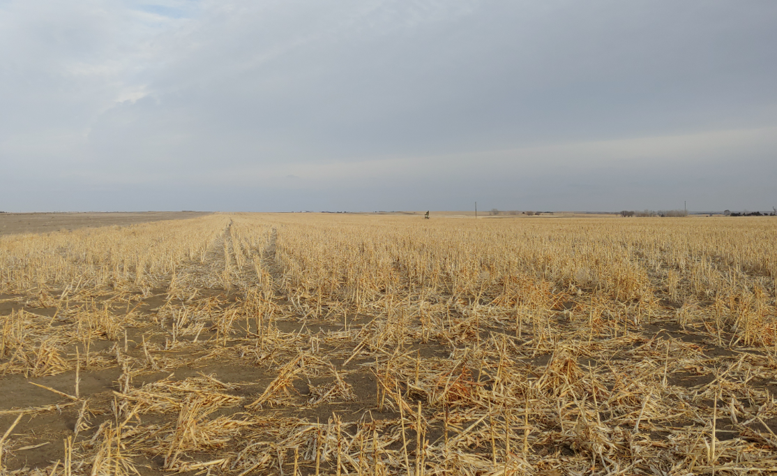 Item 7 in 150 +/- Acres Russell County, Kansas gallery